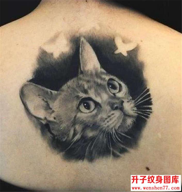 黑灰后背猫咪纹身图片