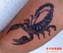 小腿蝎子纹身图案