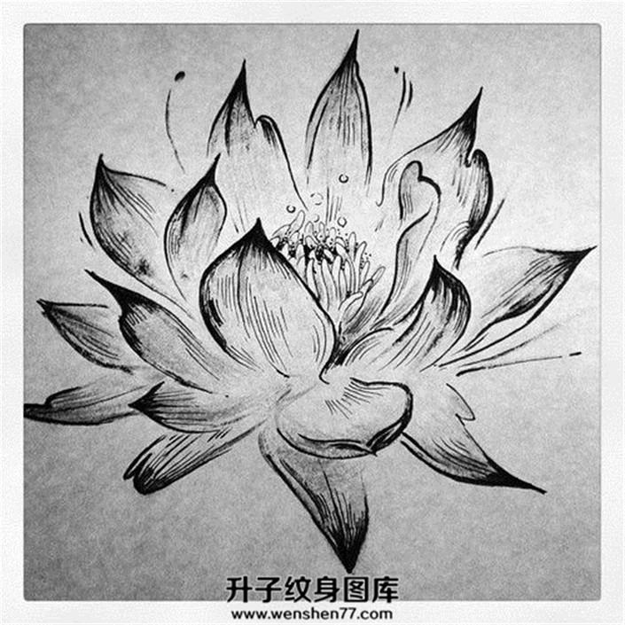 荷花纹身手稿