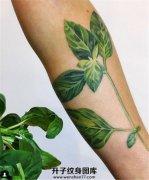小臂植物纹身