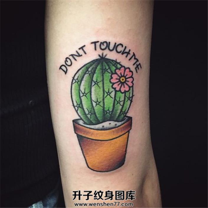 大臂上一株开花的仙人掌