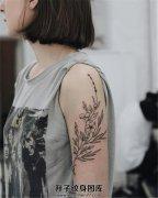 女生大臂温柔的花朵植物纹身
