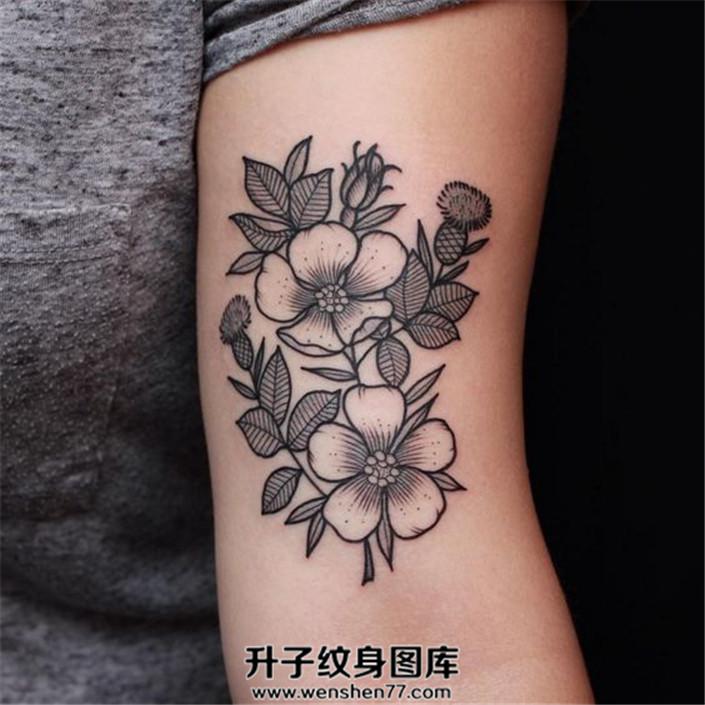 女性大臂内侧清新植物纹身