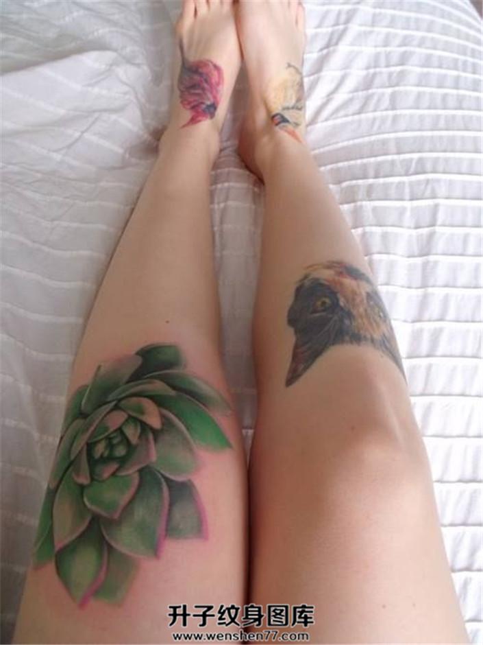妹子膝盖处的多肉植物纹身猫纹身