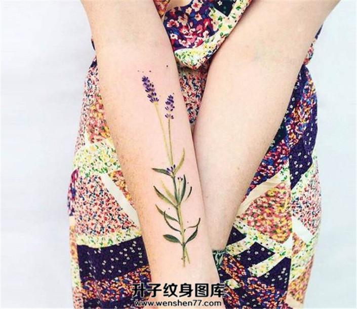 女生小臂上的薰衣草纹身图案