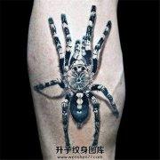 男性小臂上欧美写实的蜘蛛纹身