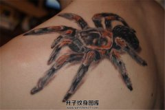 男性肩部写实逼真的蜘蛛纹身