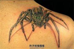 男性肩部写实蜘蛛纹身