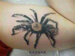 男性大臂内侧3D蜘蛛纹身