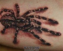 男性欧美写实蜘蛛纹身