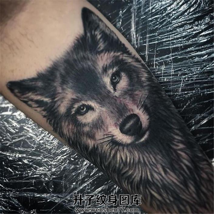 男性小臂欧美写实狼头纹身