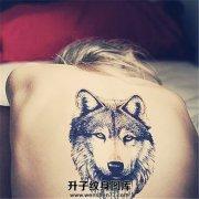 女性背部写实狼头纹身