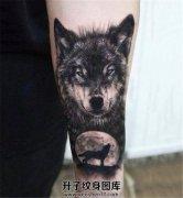 男性小臂狼头纹身对月嚎叫的狼纹身