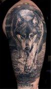 男性大臂欧美写实狼纹身