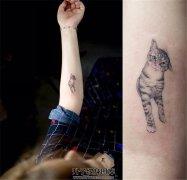 女生小臂宠物猫纹身