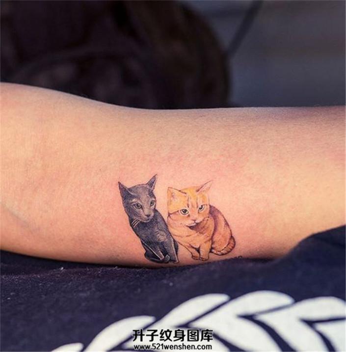 女生手臂上的两只家里猫咪纹身