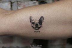 想纹自己家的宠物纹身?