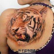 女性肩部欧美写实老虎纹身