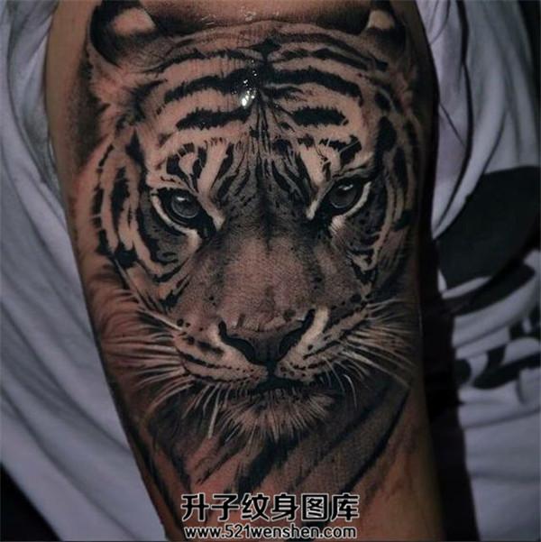 男性大臂写实老虎纹身