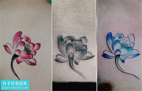 女性锁骨彩色传统荷花纹身图片大全