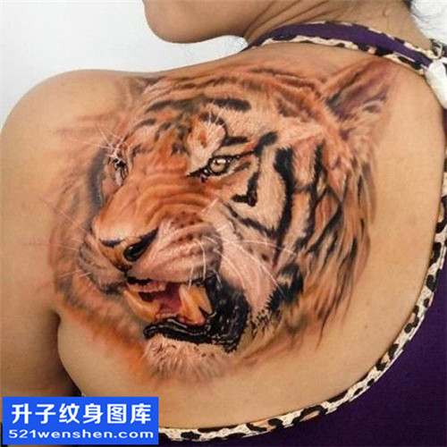 女性后背彩色欧美老虎纹身图案大全