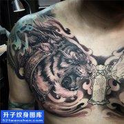 男性胸口欧美老虎纹身图片大全