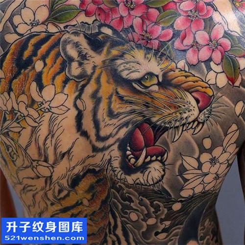 男性传统彩色满背老虎纹身图片大全