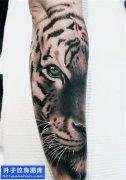 男性小臂欧美黑灰老虎纹身图案大全