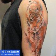 男性大臂欧美彩色老虎纹身图案大全