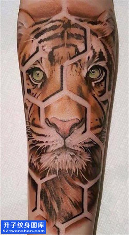 男性小臂彩色欧美老虎纹身图片大全