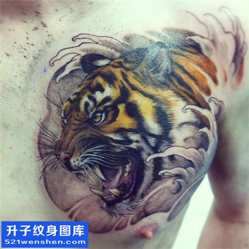 男性胸口传统彩色老虎纹身图片大全