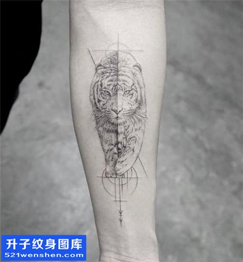 男性欧美小臂老虎纹身图片大全