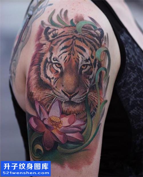 女性大臂传统彩色老虎纹身图案大全