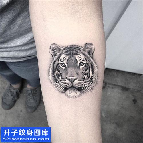 男性小臂欧美老虎纹身图案大全