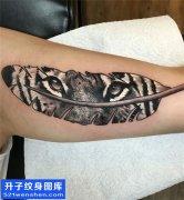 男性大臂欧美羽毛老虎纹身图案大全