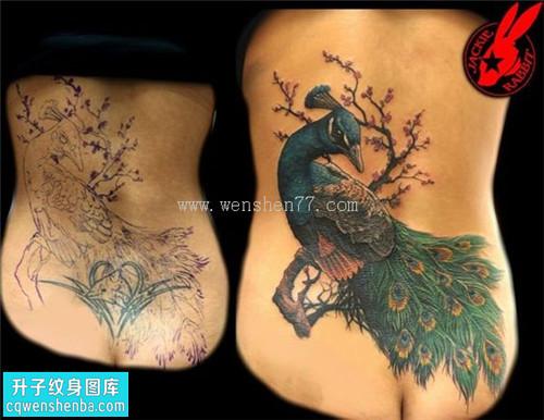 女性后背传统遮盖凤凰纹身图片大全