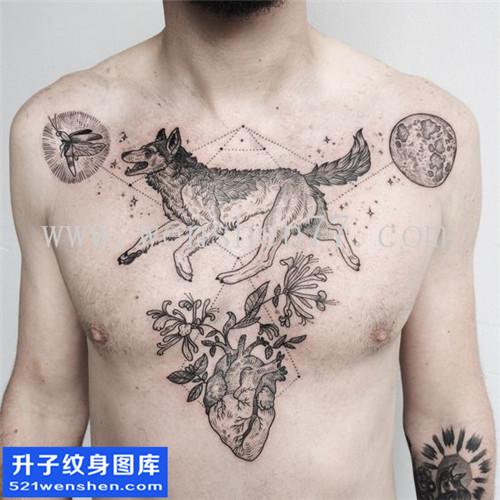 男性欧美花胸狼纹身图案大全