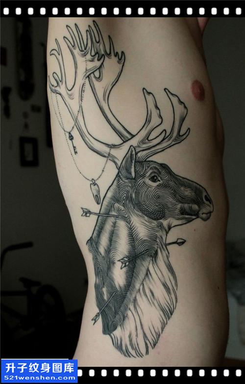 男性侧腰欧美鹿纹身图案大全