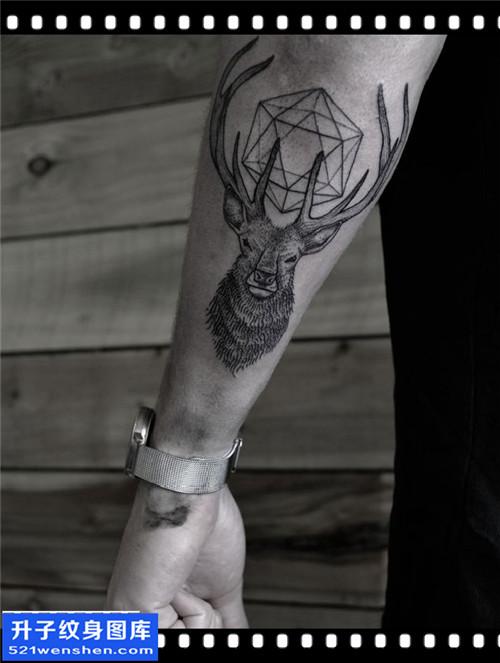 男性小臂欧美鹿纹身图案大全