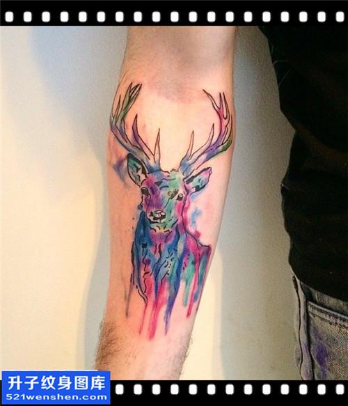 男性小臂水墨彩色鹿纹身图案大全