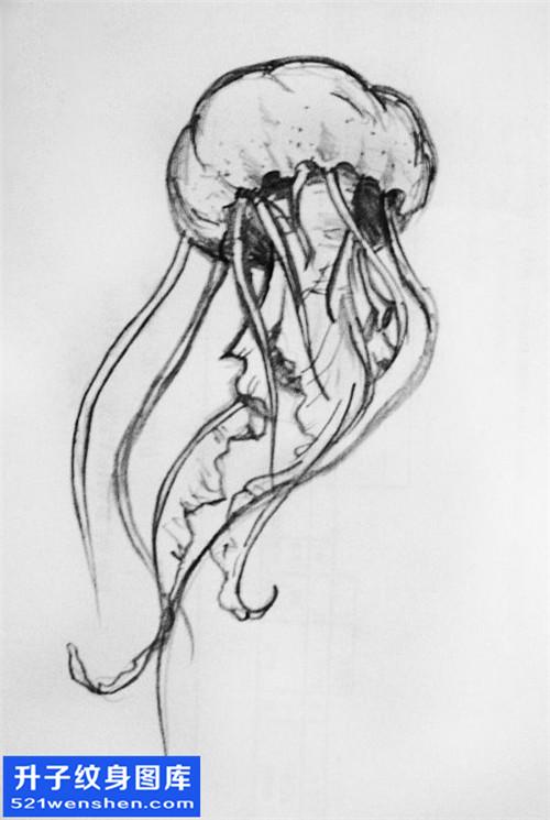 水母纹身手稿图案大全 纹身手稿图片
