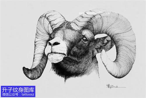羊头纹身手稿图案大全
