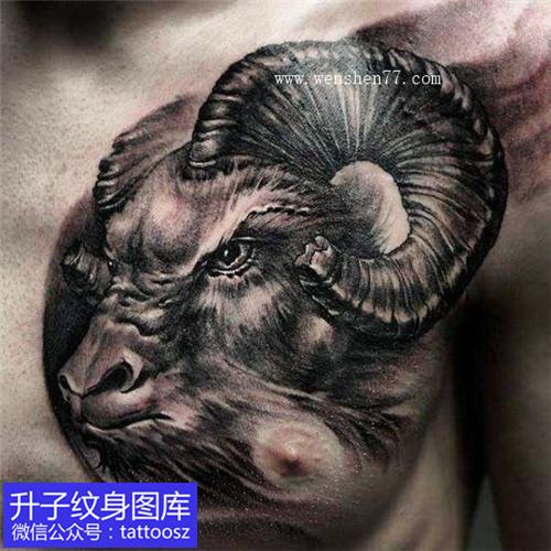 男性胸口黑灰欧美羊头纹身图案大全