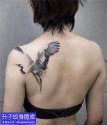 推荐3款精致的仙鹤纹身图案大全
