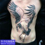 推荐一款男性腹部水墨仙鹤纹身图案