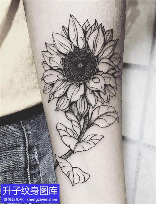 美女手臂内侧黑灰向日葵纹身图案
