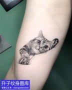 手臂动物可爱猫咪纹身图案