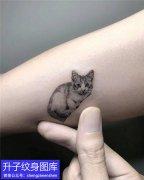 手臂小猫咪纹身图案